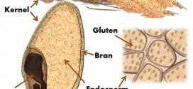 گزارشکار تعیین میزان گلوتن مرطوب و خشک در آرد گندم