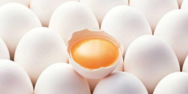 فرآیند تولید پودر و مایع تخم مرغ