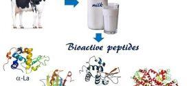 خواص و عملکردهای پپتید های زیست فعال